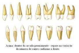Endodontia, EndodontiaZona Sul, EndodontiaZona Sul SP, EndodontiaZona Sul de SP,