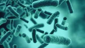 Bactérias Bucais Zona Sul SP, Bactérias Bucais na Zona Sul SP,